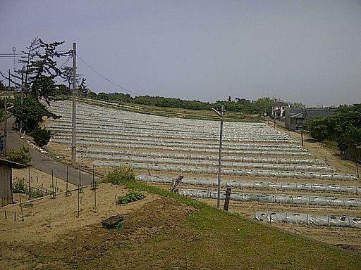 リビングから望むスイカ畑